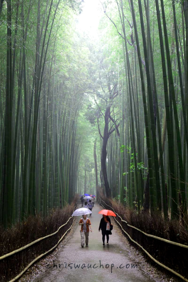 Our view of the Giant Bamboo Forest in Kyoto, Japan in May 2013