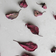 Dried poinsettia leaves