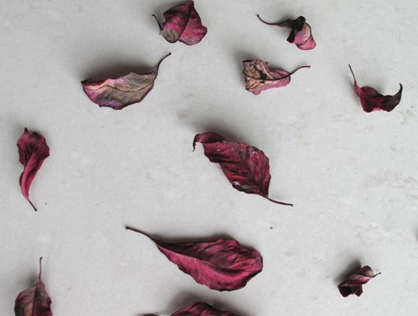 Dried poinsettia leaves