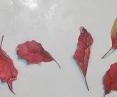 Detail: 'Fall remnant (leaf)'